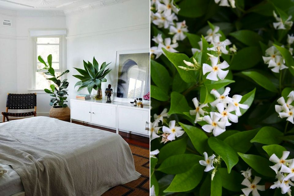 Bedroom plant ideas, easy plants to keep alive, Decorate your bedroom for better sleep ,bedroom decorating ideas, room design