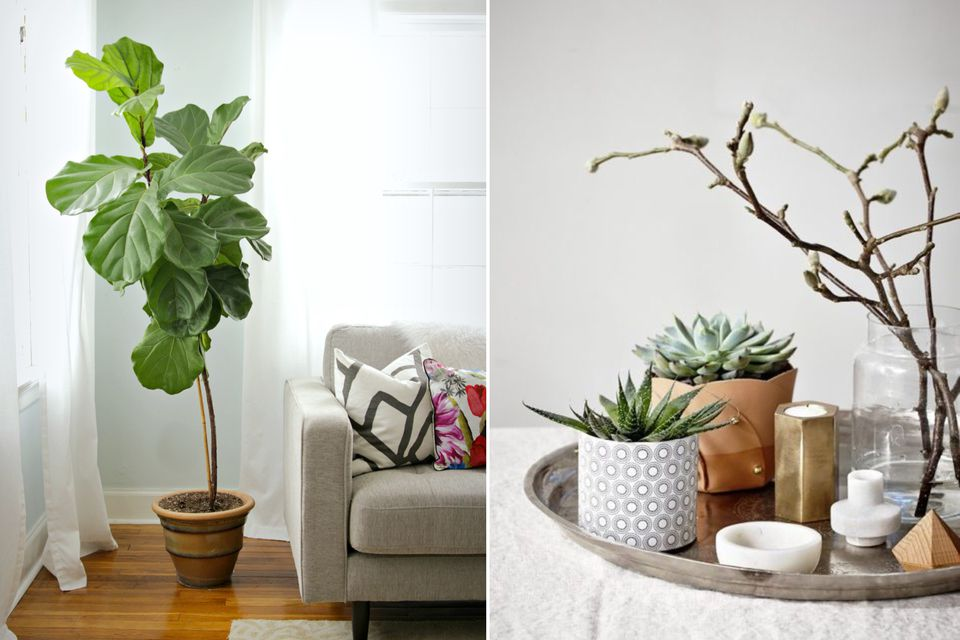 house plants, tips for house plants, indoor plants